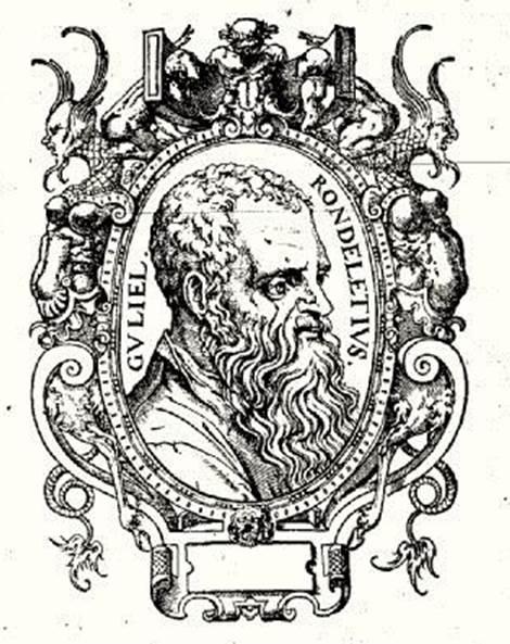 Fig. 1 Woodcut portrait of Guillaume Rondelet, from his work Libri de Piscibus Marinis (1554).